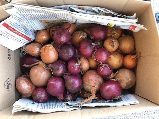 玉ねぎの保存
