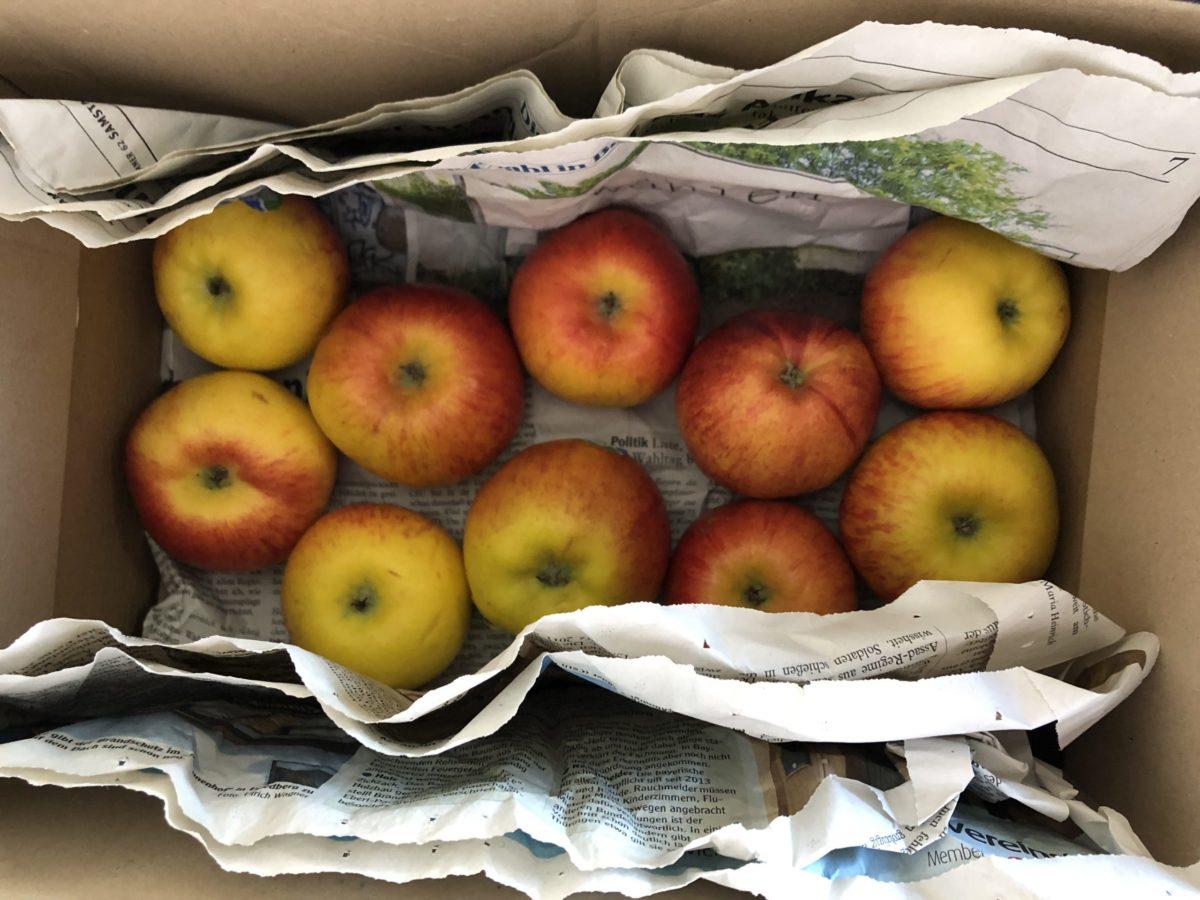 リンゴの保存